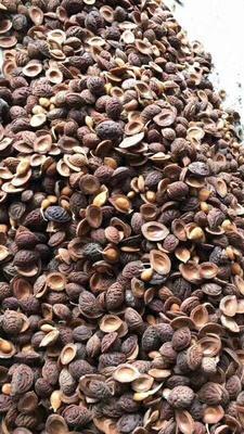 这是一张关于桃树种子 的产品图片