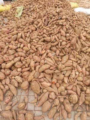 山东省潍坊市潍城区红香蕉红薯 6两~1斤 红皮