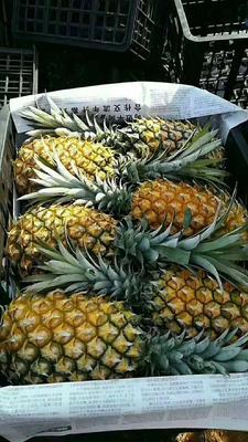 广东省湛江市徐闻县徐闻菠萝 1.5 - 2斤