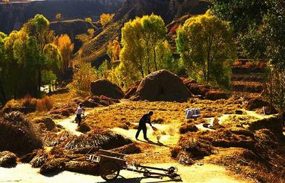 陕西省榆林市清涧县香谷小米