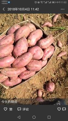 这是一张关于苏8红薯 混装通货 红皮 的产品图片