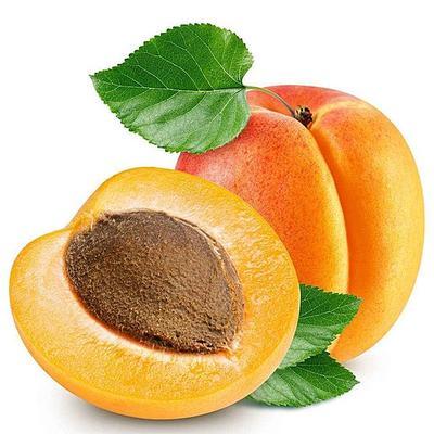 这是一张关于金太阳杏树苗 的产品图片