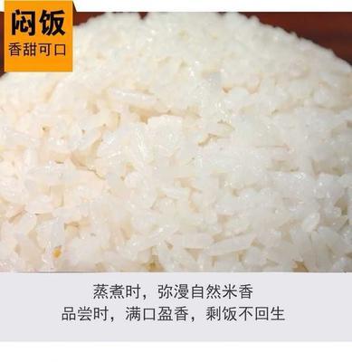 黑龙江省齐齐哈尔市建华区龙阳16大米 一等品 晚稻 粳米