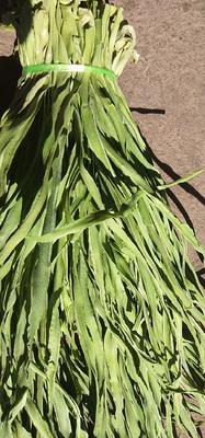 这是一张关于贡菜 的产品图片