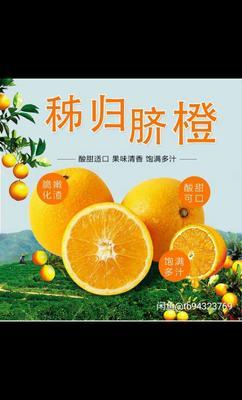 这是一张关于秭归脐橙 65 - 70mm 4-8两 的产品图片