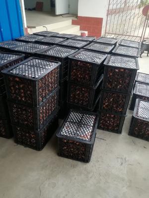 广西壮族自治区桂林市平乐县恭城柿饼 散装