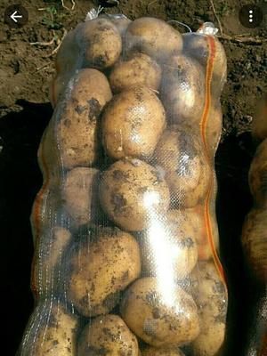 吉林省松原市扶余市荷兰15号土豆 3两以上