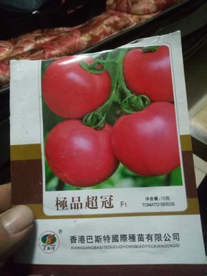 这是一张关于硬粉番茄苗 六叶一心 的产品图片