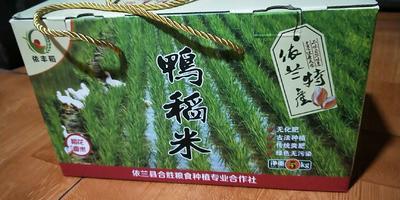 黑龙江省哈尔滨市依兰县东北大米 一等品 晚稻 粳米