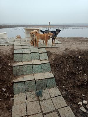 湖北省清水小龙虾 2钱以下 人工殖养