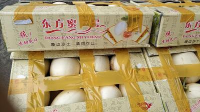 江西省赣州市大余县脆宝甜瓜 1.5斤以上