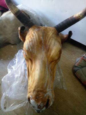内蒙古自治区锡林郭勒盟锡林浩特市牛头