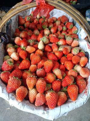 安徽省合肥市长丰县红颜草莓  20克以下 15克以上
