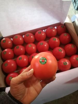 云南省玉溪市峨山彝族自治县硬粉番茄 通货 弧二以上 硬粉