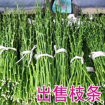 这是一张关于柑树苗 0.5米以下 的产品图片