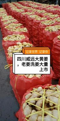 四川省内江市威远县老姜 混装通货 带土