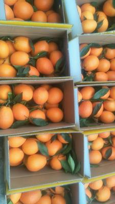 这是一张关于奉节脐橙  自然成长不催熟的产品图片