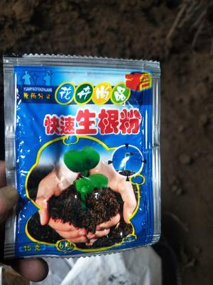 这是一张关于生根剂 的产品图片