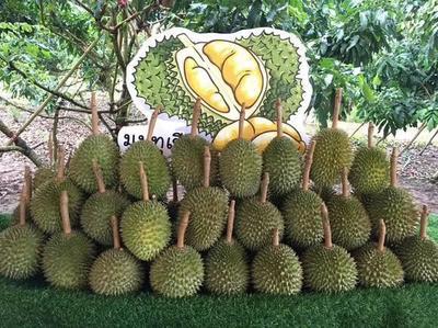 这是一张关于干尧榴莲 2 - 3公斤 80 - 90%以上 的产品图片
