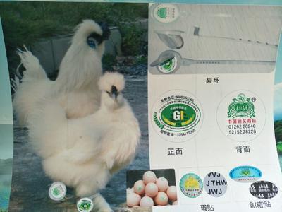 这是一张关于乌骨鸡种蛋 孵化 箱装 的产品图片