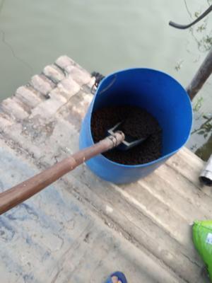 这是一张关于加州鲈鱼 人工养殖 1-1.5公斤 的产品图片
