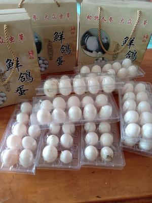 广东省惠州市惠城区银羽王鸽子蛋 食用 礼盒装