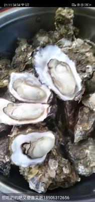 这是一张关于海蛎 的产品图片