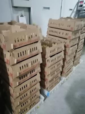 湖北省襄阳市枣阳市土鸡苗