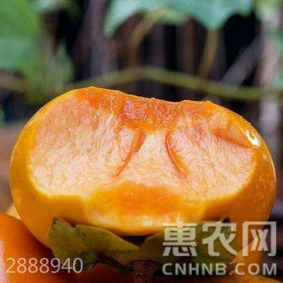 这是一张关于日本次郎甜柿苗 的产品图片