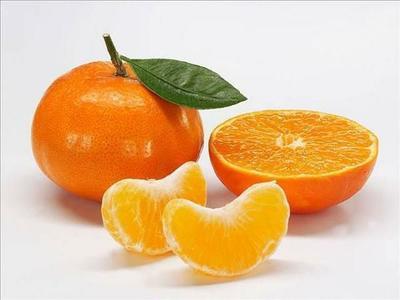 四川省遂宁市安居区明日见柑橘苗 嫁接苗 0.35~0.5米