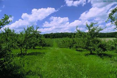 这是一张关于果园 转让 10~20年 200亩 的产品图片