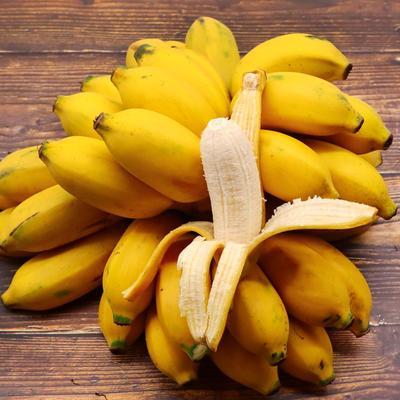 广西壮族自治区南宁市西乡塘区小米蕉 七成熟