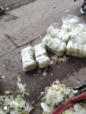 河南省郑州市中牟县胶州大白菜 1~2斤 净菜