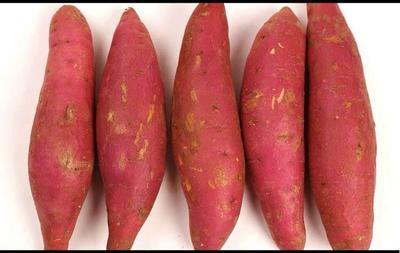 广东省茂名市茂南区红姑娘红薯 3两~6两 红皮