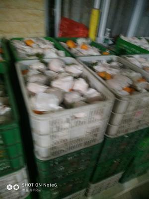 这是一张关于耙耙柑 统货 3两以上 的产品图片