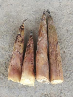 这是一张关于 雷竹笋 鲜笋 的产品图片
