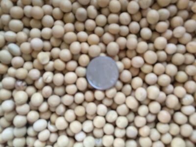 黑龙江省哈尔滨市香坊区黑龙江大豆 生大豆 1等品