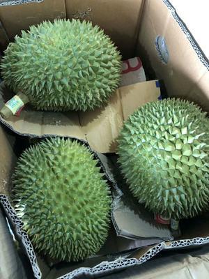 广西壮族自治区崇左市龙州县猫山王榴莲 2 - 3公斤 40 - 50%以上