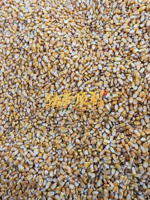 内蒙古自治区巴彦淖尔市五原县先玉335玉米粒 净货 水份14%-16%