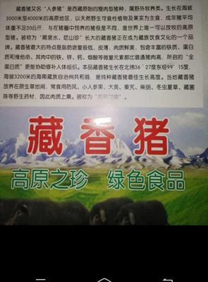 青海省海南藏族自治州共和县藏香猪肉 生肉