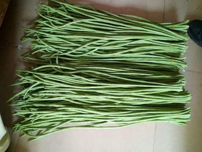 广西壮族自治区柳州市柳城县长青豆角种子 ≥90%