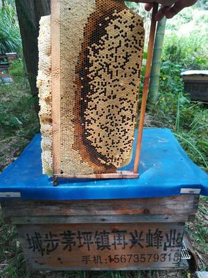 湖南省邵阳市城步苗族自治县土蜂蜜 塑料瓶装 2年以上 98%