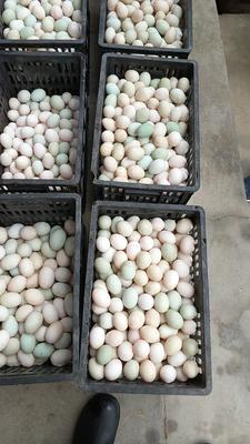 这是一张关于土鸭蛋 食用 箱装 的产品图片