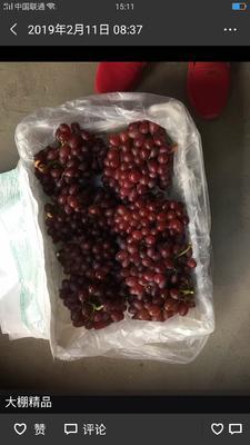 这是一张关于克瑞森无核葡萄 1.5- 2斤 5%以下 1次果 的产品图片