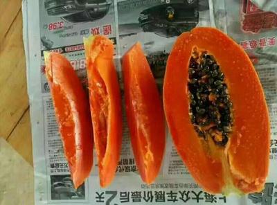 这是一张关于红心木瓜 1 - 1.5斤 的产品图片