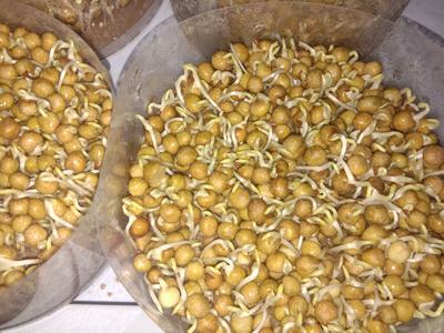 这是一张关于豌豆苗 人工种植 10-15cm 的产品图片