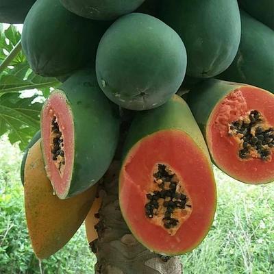 广西红心木瓜香甜冰糖心牛奶木瓜应季新鲜水果红肉青木瓜现摘批发