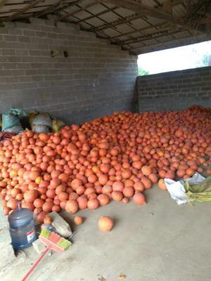 这是一张关于红南瓜 1~2斤 的产品图片