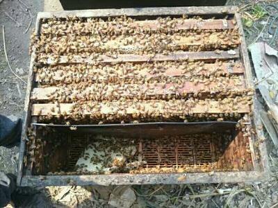 江西省赣州市宁都县土蜂蜜 塑料瓶装 2年以上 100%