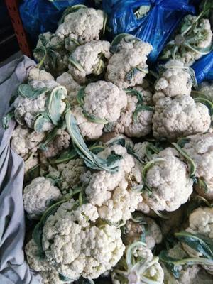 山东省济南市章丘市白菜花 3~6斤 净菜